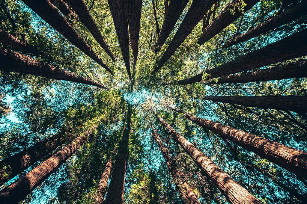 Árvores e floresta