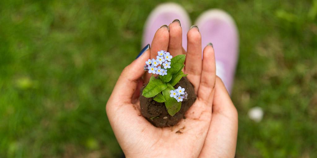 Mão a segurar uma planta pequena
